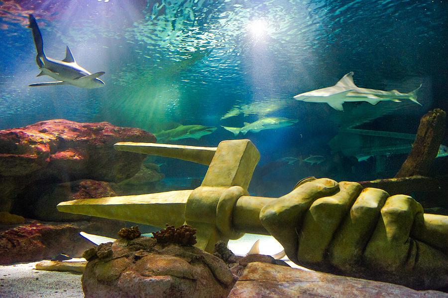 Shark Tank Trident Photograph