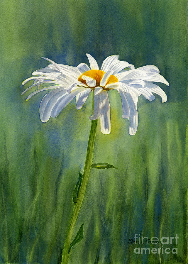 Shasta Daisy Flower With Blue Green Background Painting