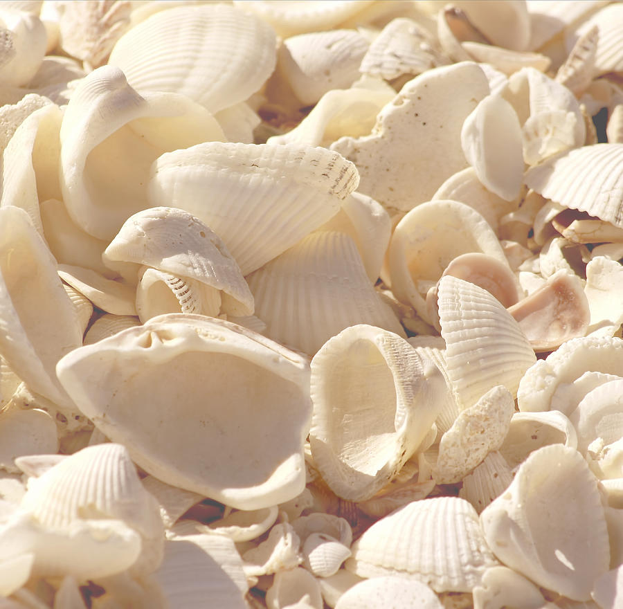 She Sells Seashells Photograph