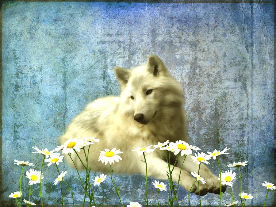 She Wolf Photograph