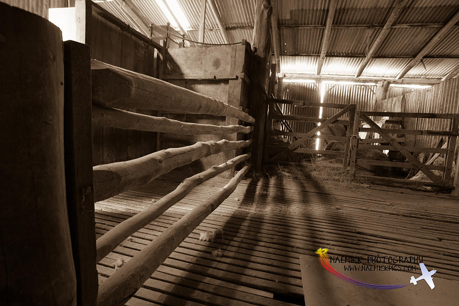 Shearing Shed Digital Art  - Shearing Shed Fine Art Print