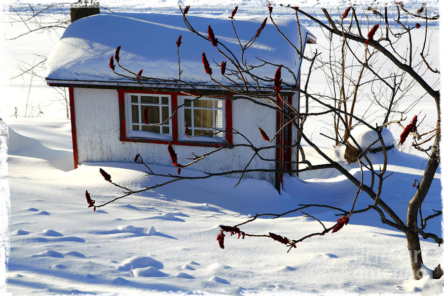 Shed Photograph - Shed In Winter by Sophie Vigneault