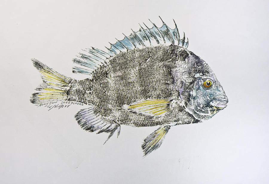 Sheepshead Mixed Media