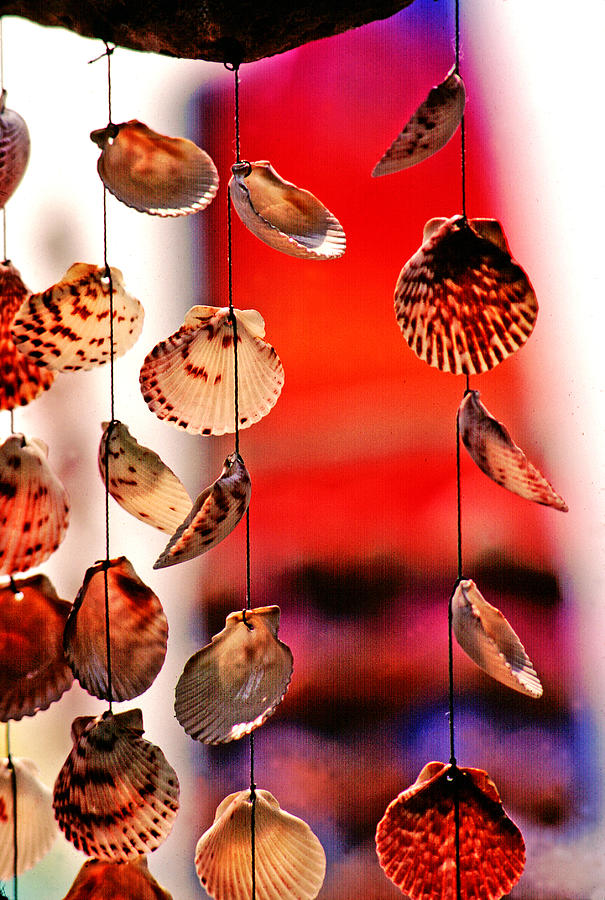 Provincetown Photograph - Shell Mobile by Mike Flynn