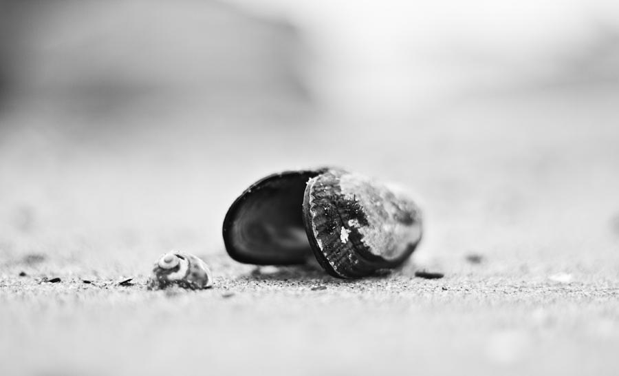 Shell On The Beach Photograph  - Shell On The Beach Fine Art Print