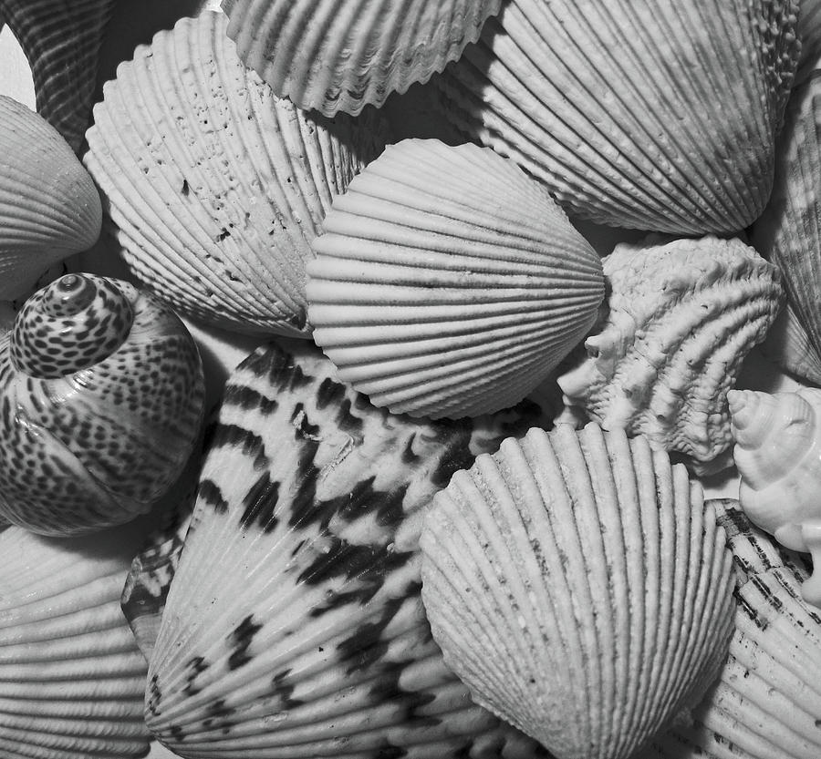 Shells In Black And White Photograph