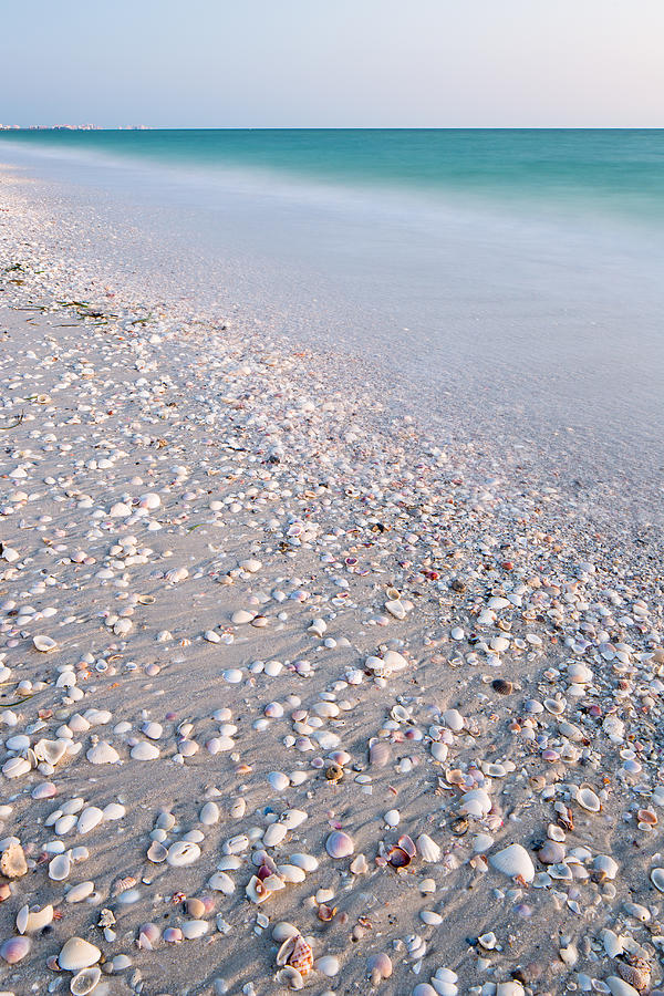 Shells In The Sand Photograph
