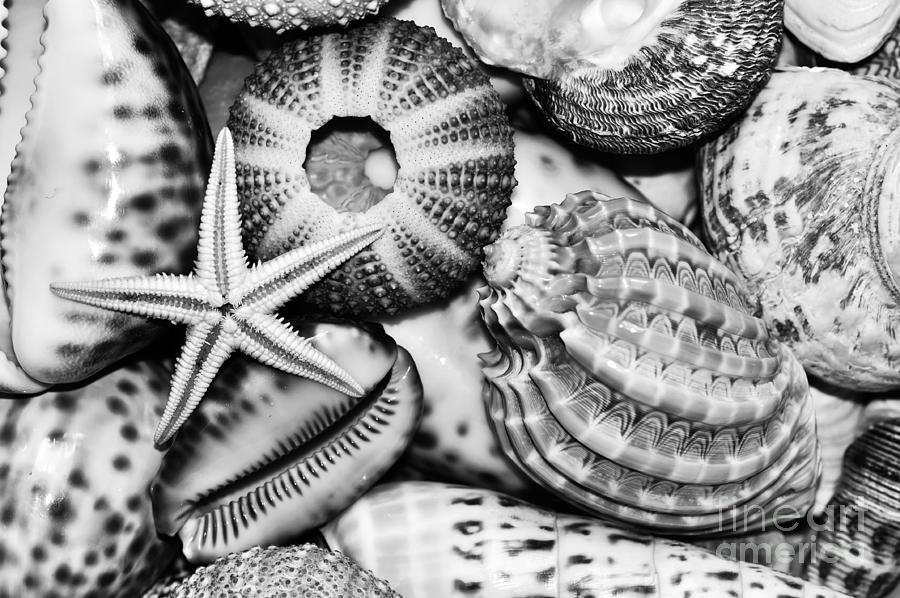 Shellscape In Monochrome Photograph