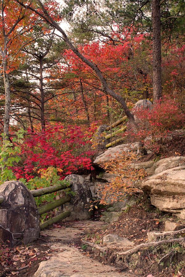 Shifting Colors Photograph