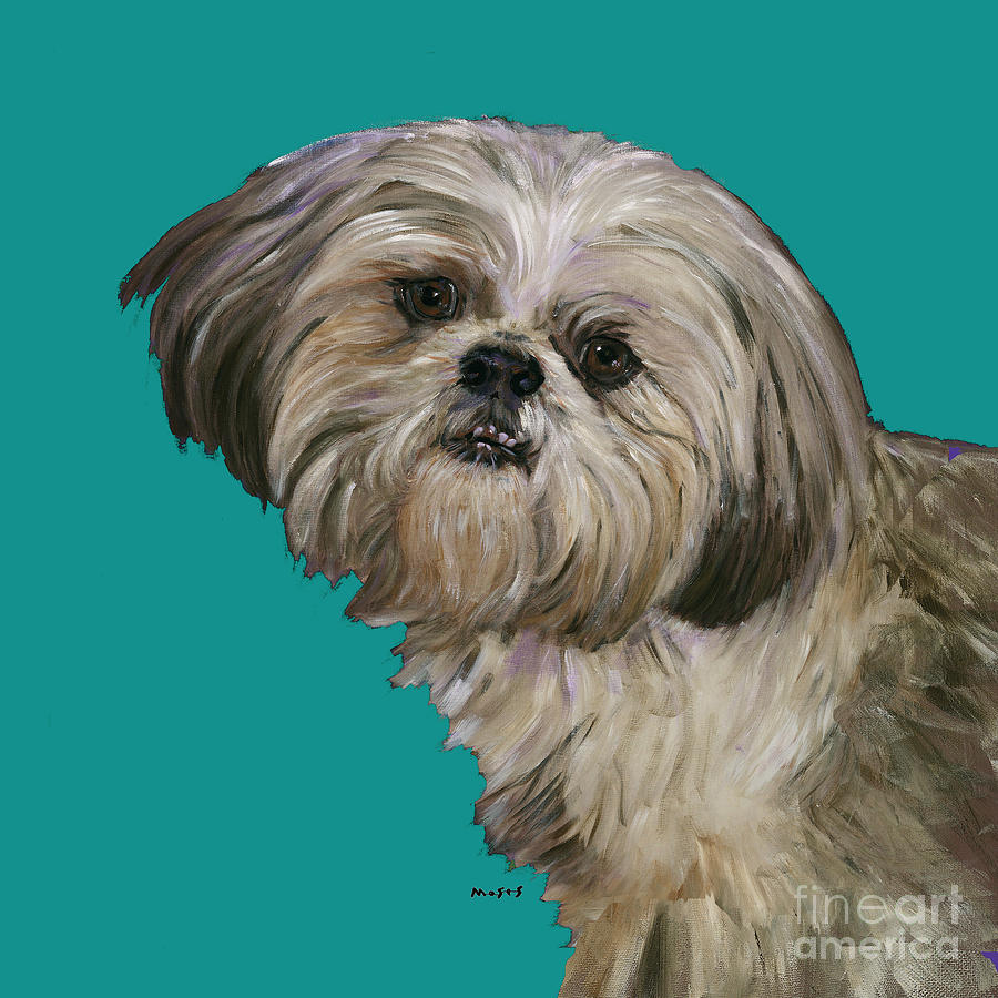 Shih Tzu On Turquoise Painting  - Shih Tzu On Turquoise Fine Art Print