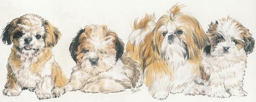 Shih Tzu Puppies Mixed Media