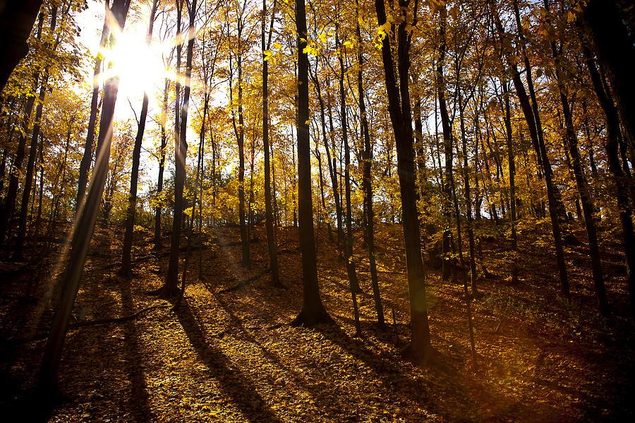 Shining Sun In The Woods Photograph - Shining Sun In The Woods by Kamil Swiatek