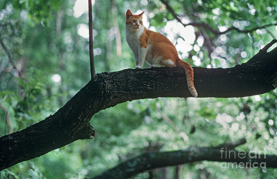 Tree Photograph - Shorthair Cat by James L. Amos