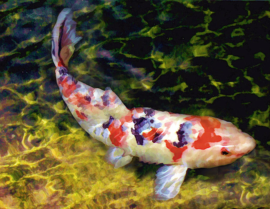 The gallery for japanese koi pond painting for Koi carp fish pond