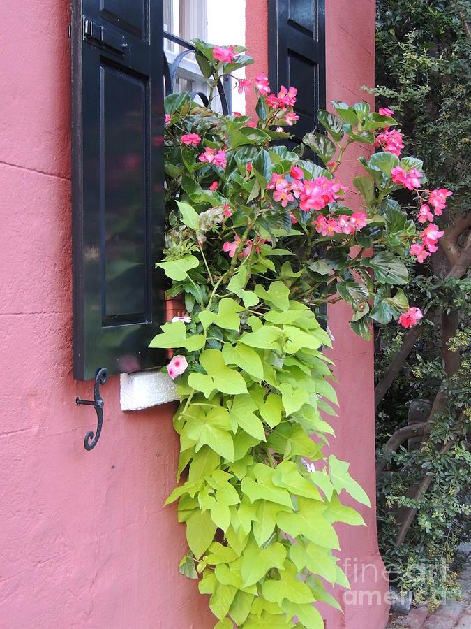 Shutter And Flower Photograph