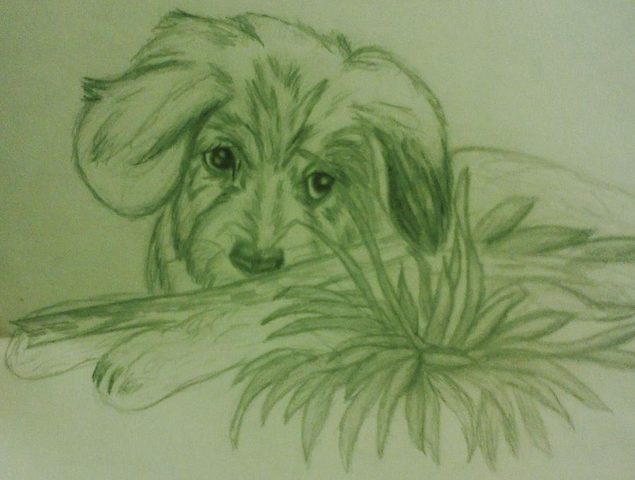 Shy Puppy Drawing