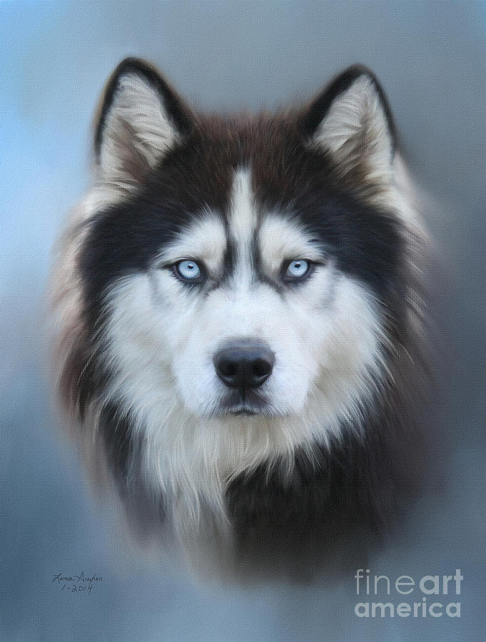 Siberian Husky Digital Art