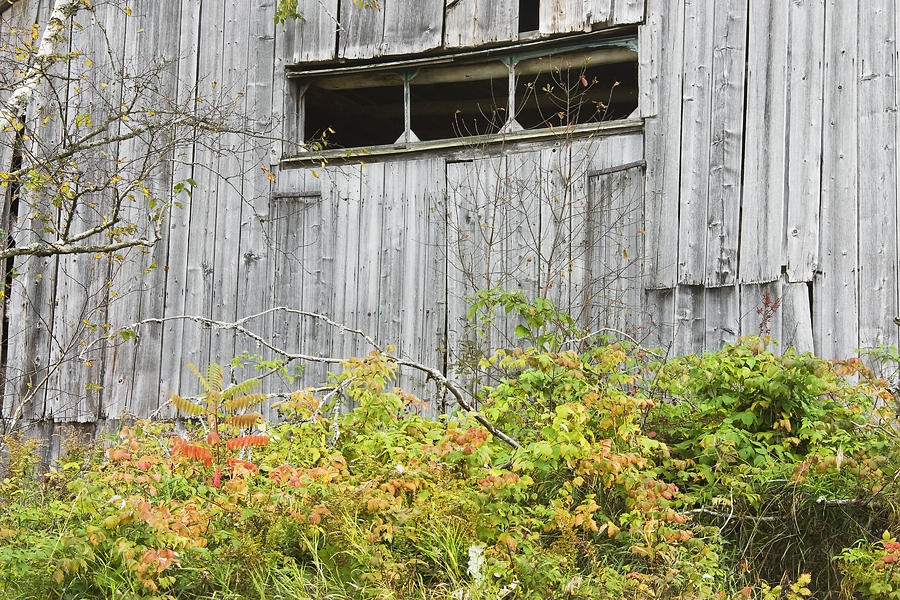 Side Of Barn In Fall Photograph