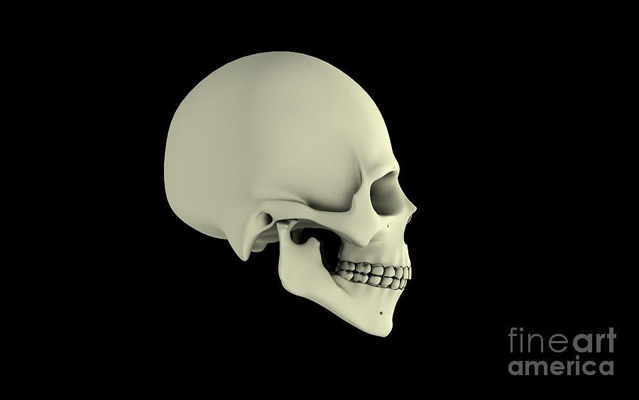 Side View Of Human Skull Digital Art