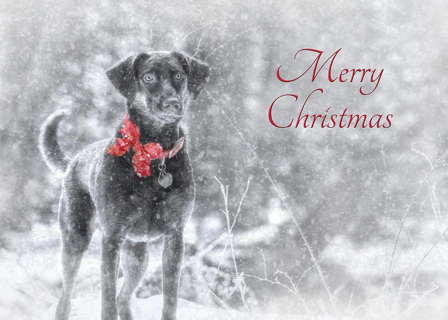Merry Christmas Photograph - Sienna - Merry Christmas by Lori Deiter
