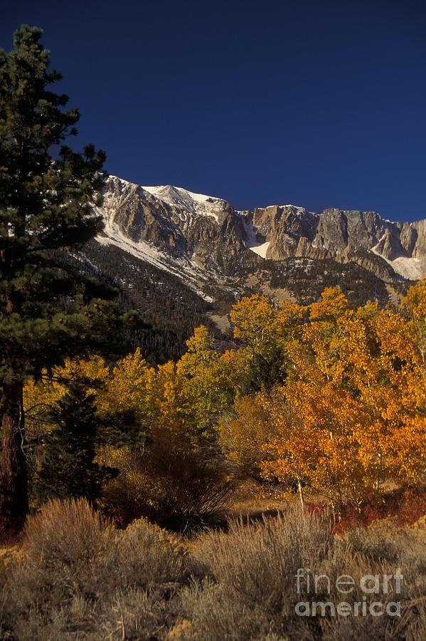 Plant Photograph - Sierra Nevadas In Autumn by Ron Sanford