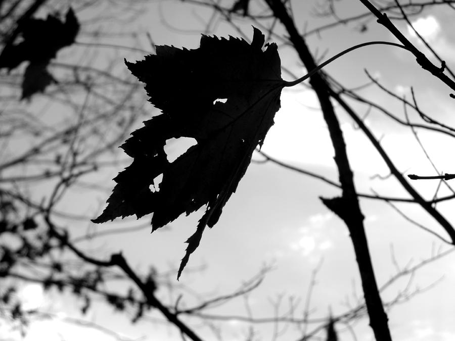 Fall Photograph - Silhouette by Allison Tilberg