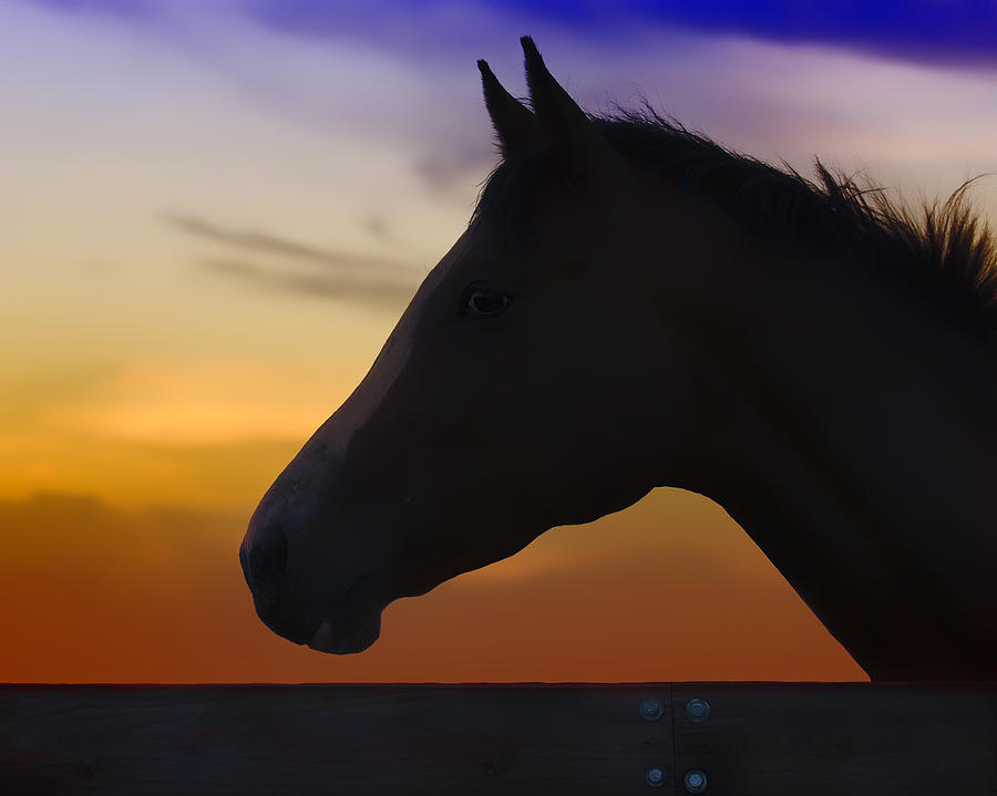 Horse Photograph - Silhouette Of A Horse At Sunset by Wolf Shadow  Photography