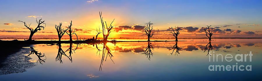 Silhouettes Dead Gum Tree Line Still Calm Water Reflections Sunrise Dawn Early Morning Pelican Point Lake Barmera Bonney Riverland South Australia Australian Photograph - Silhouetted Sential Sunset by Bill  Robinson