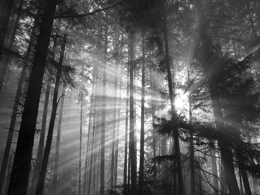 Autumn Photograph - Silver Light by Diane Schuster