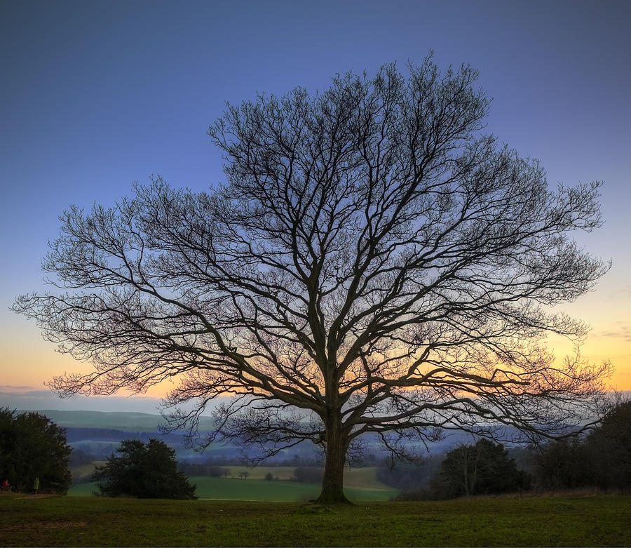 Single Bare Winter Tree Against Vibrant Sunset Photograph