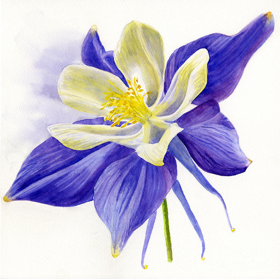 Single Blue Columbine Painting  - Single Blue Columbine Fine Art Print
