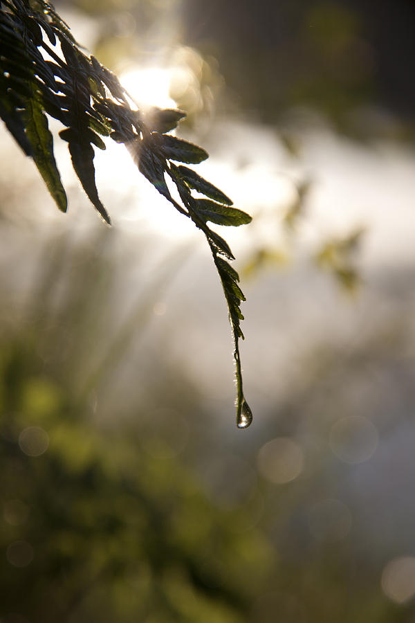 Single Drop Photograph  - Single Drop Fine Art Print