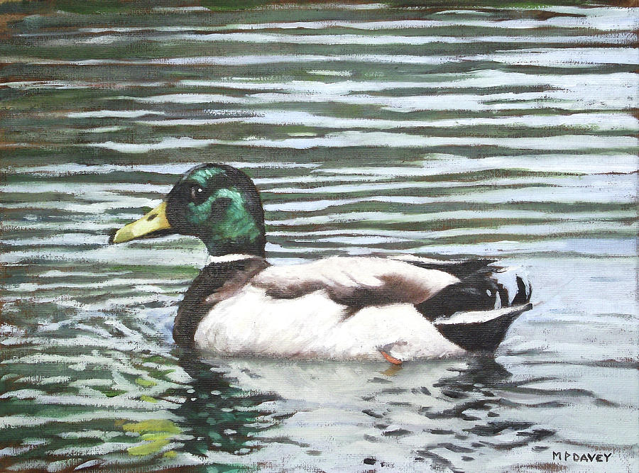 Single Mallard Duck In Water Painting  - Single Mallard Duck In Water Fine Art Print