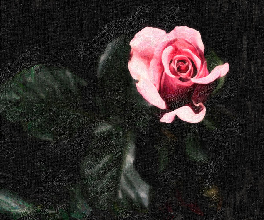Single Pink Rose Painting  - Single Pink Rose Fine Art Print