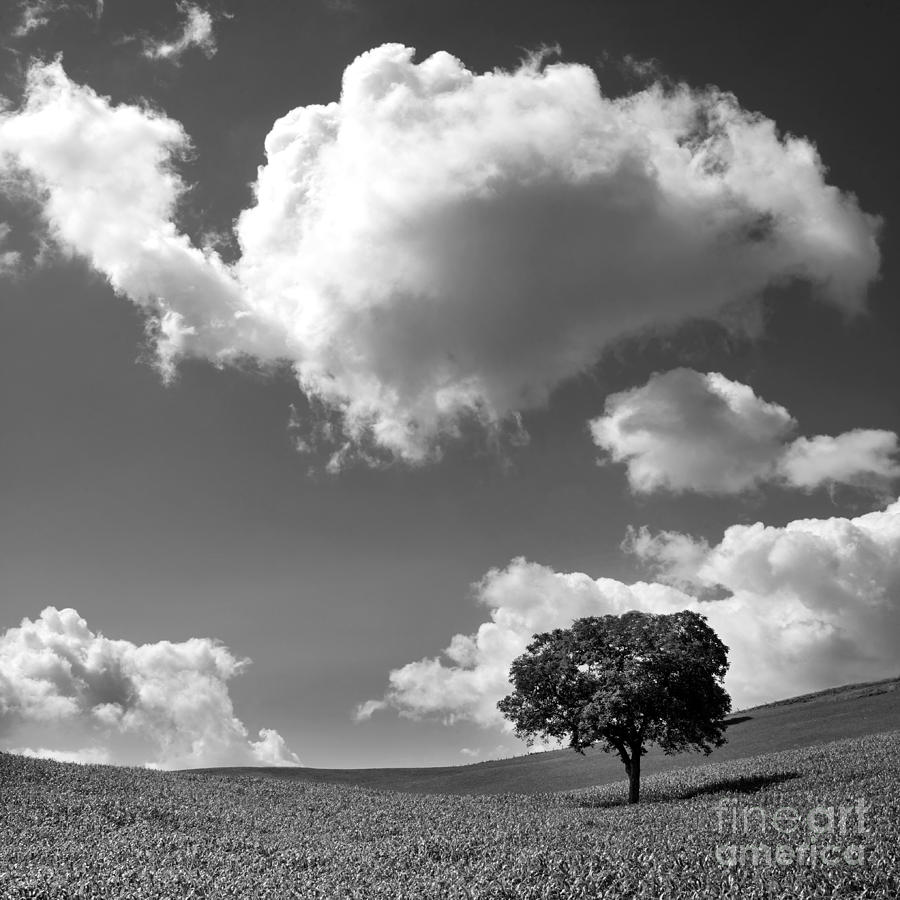 Single Tree. Auvergne. France Photograph  - Single Tree. Auvergne. France Fine Art Print