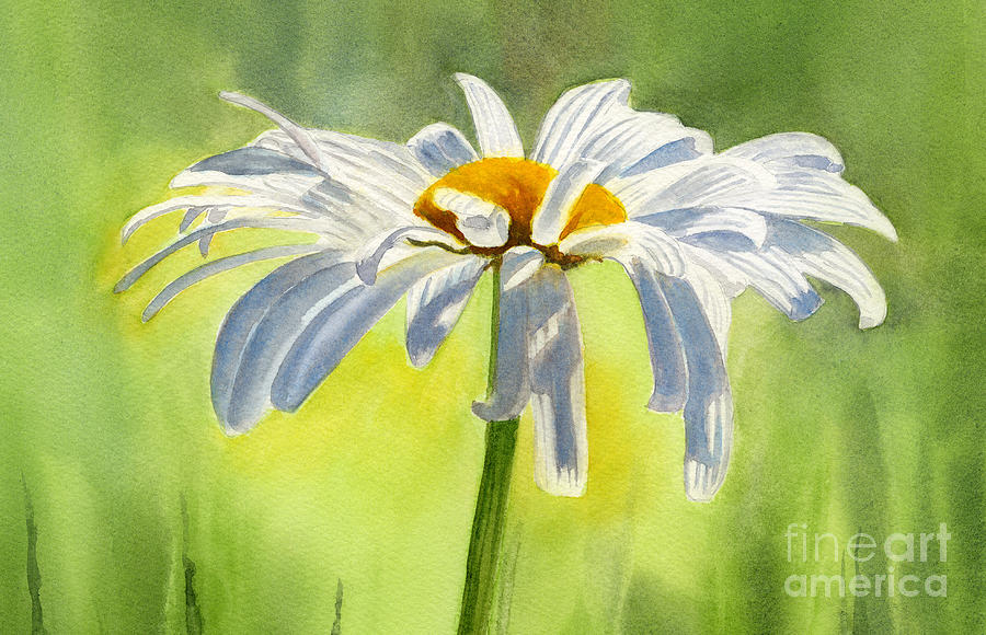 Single White Daisy Blossom Painting