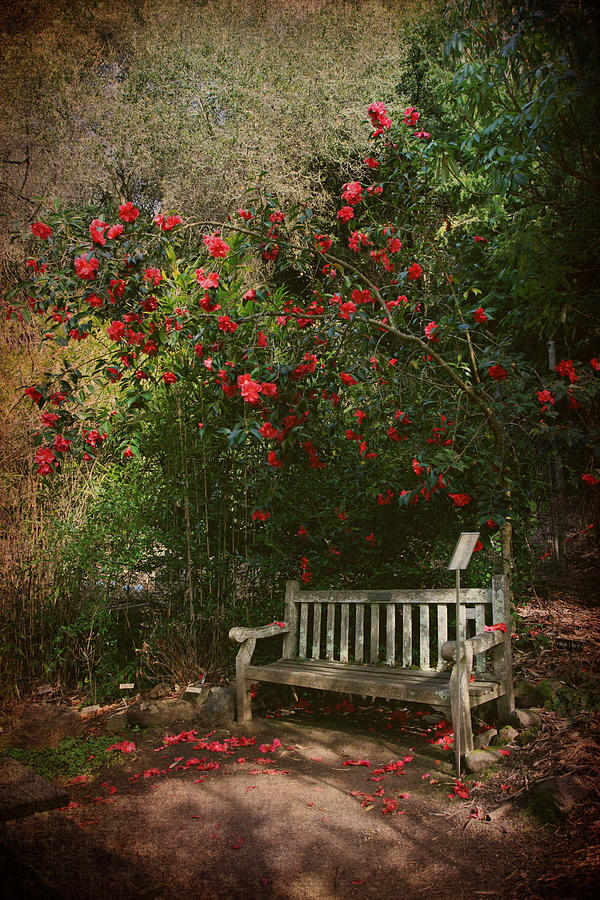 Sit With Me Here Photograph  - Sit With Me Here Fine Art Print