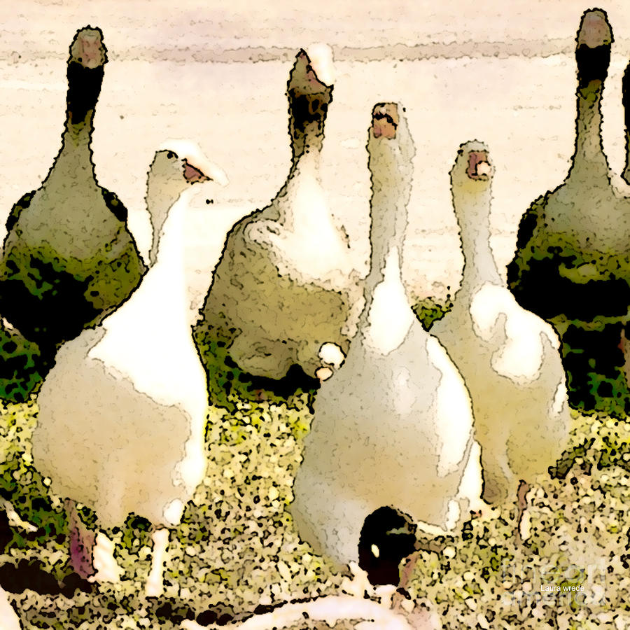 Six Geese And A Duck Photograph