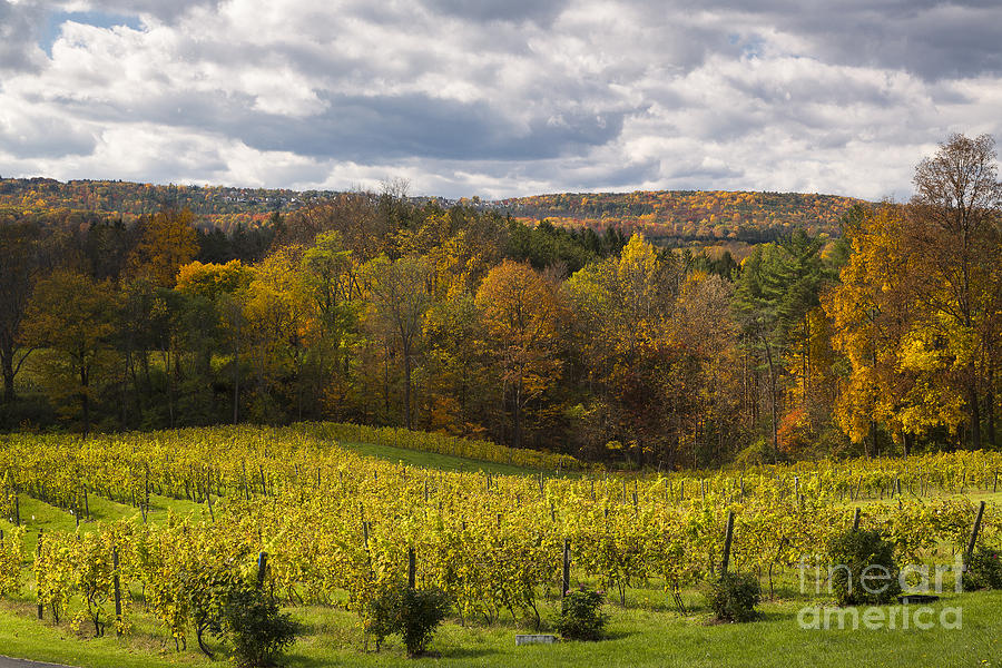 Six Mile Creek Vineyard Photograph