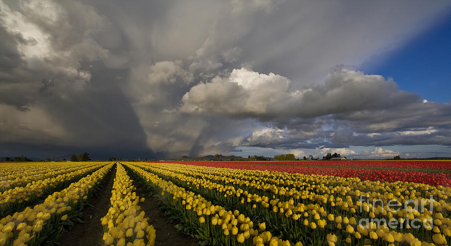 Skagit Valley Storm Photograph