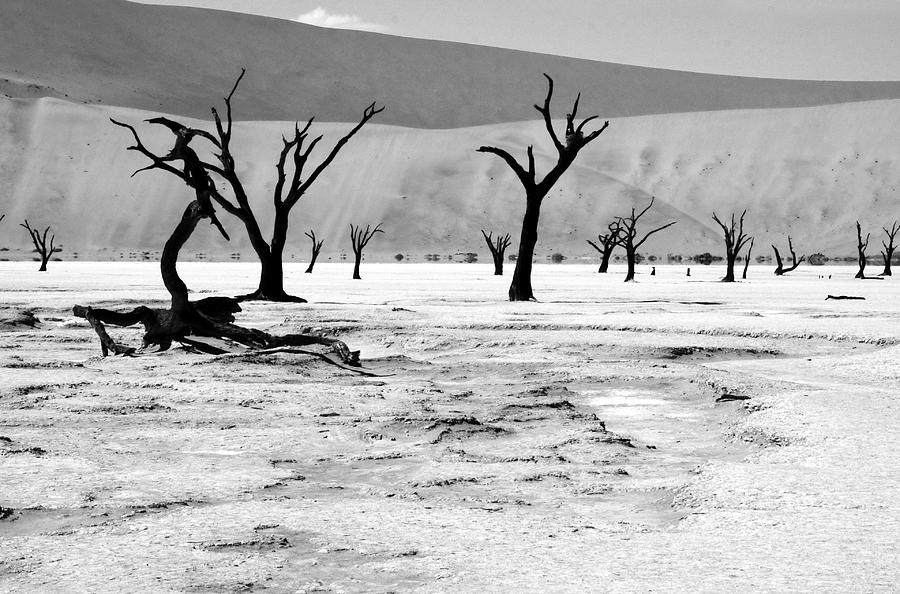 Africa Photograph - Skeleton Forest by Aidan Moran