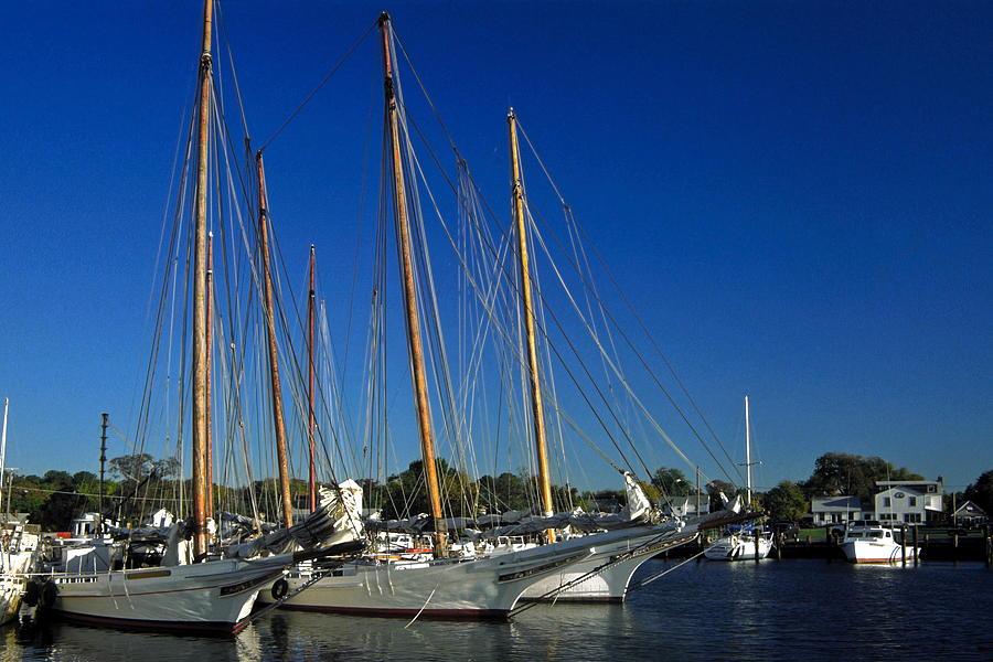 Skipjack Sailboats Docked Photograph - Skipjacks  by Sally Weigand