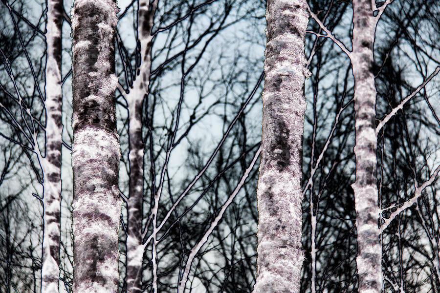 Birch Photograph - Skutskar 005 by Per Lidvall