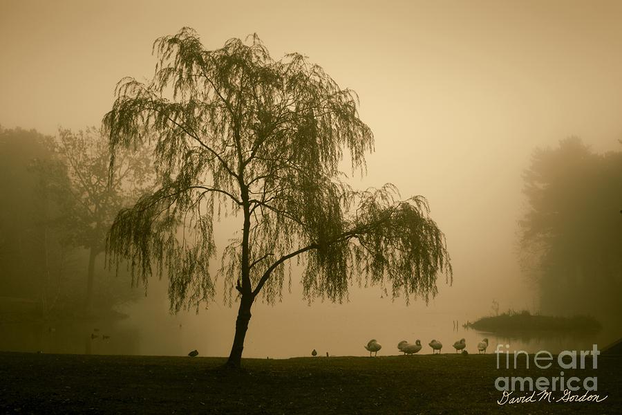 Slater Park Landscape No. 1 Photograph