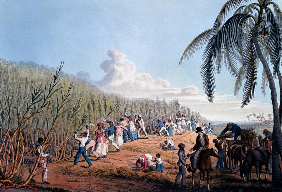 Slaves Cutting The Cane, From Ten Views Drawing