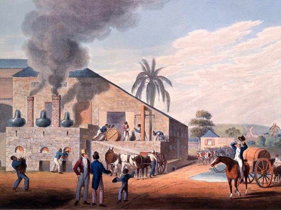 Slave Drawing - Slaves Set To Work Producing Rum by William Clark