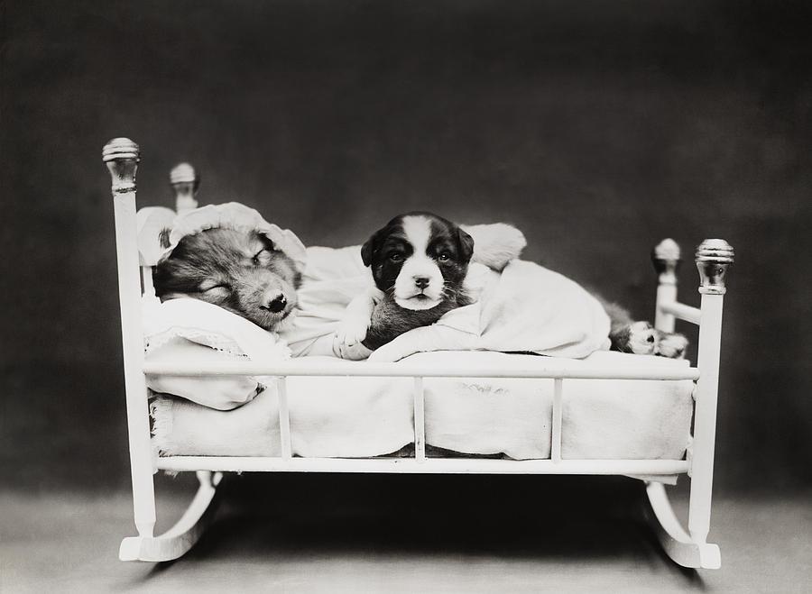Sleep Over Photograph