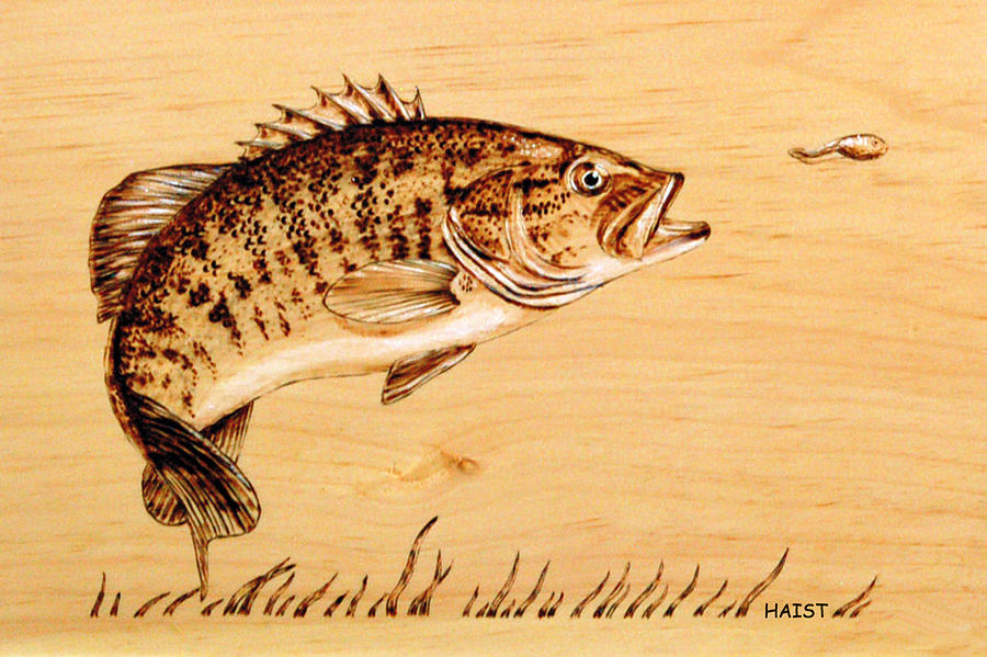 Small Mouth Bass Pyrography  - Small Mouth Bass Fine Art Print