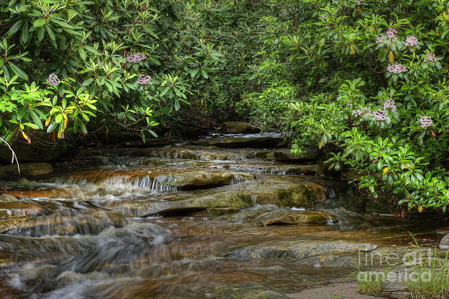 Small Stream In West Virginia With Mountain Laurel Photograph
