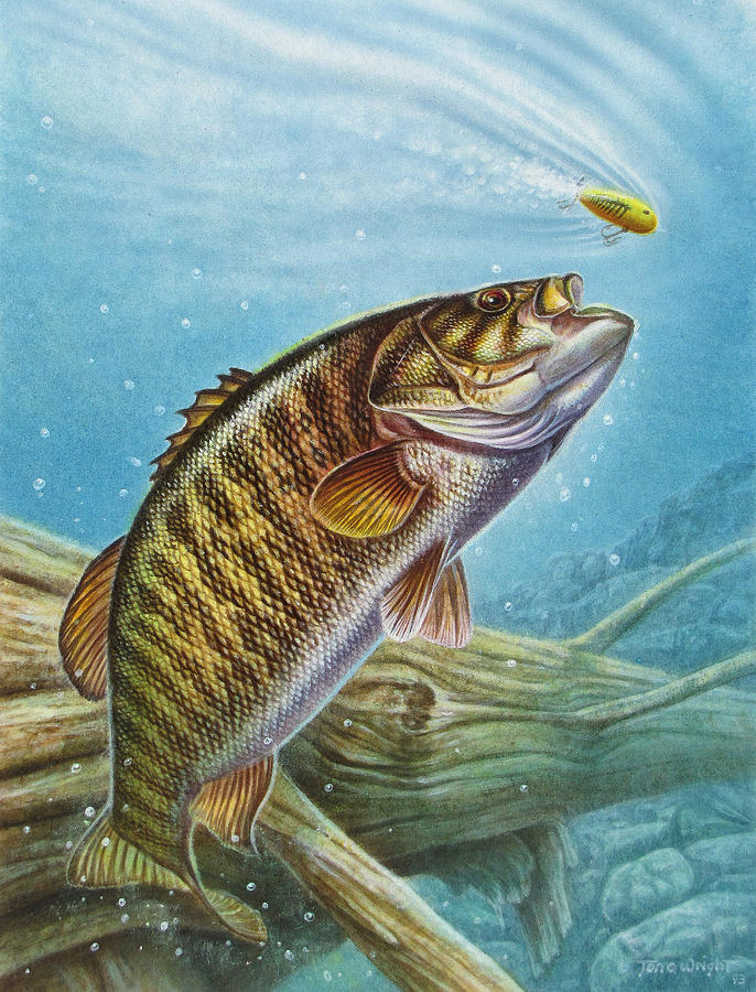smallmouth bass painting by jq licensing